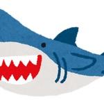 【香川】さぬき市でサメの目撃情報