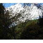 『冬を迎える』の画像