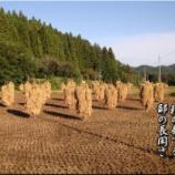 『稲の奏で』の画像