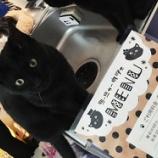 『犬も好きだけど猫も好きなそこのあなた!「コーニャーカフェ」で癒されてみては??』の画像