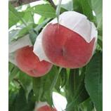 『我が家の桃を召し上がれ!』の画像