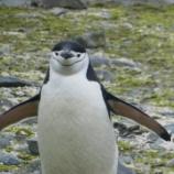 『南極クルーズレポート、進行中』の画像
