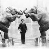 『「萬物生光輝」世界のサーカスでの動物使用の現状』の画像