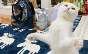 """""""ファッションモデル""""のような猫"""