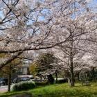 『春のお便り』の画像