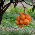 【画像】果物とか木の実ってたまにバカみたいな生え方するやついるよなwwwww