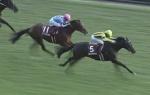 東京芝1600mの傾向と富士S登録馬の東京芝実績