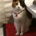 我が家のネコ その1|[奈良市の整骨院]ひろ接骨院