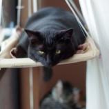 『窓用ハンモックですやすやお昼寝』の画像