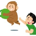 【福岡】サル目撃100件超に県警「捕まえる道具が無い」