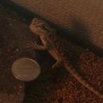 爬虫類大好きブログ