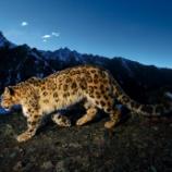 『雪豹はやはり速い。〜OSX 10.6再販』の画像
