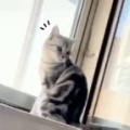 ネコが窓辺から外を見ていた。…はてにゃ? → お分かりいただけただろうか…