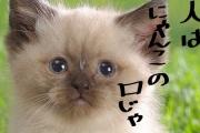 """武田鉄矢が「金八先生」の名言を完全否定 「""""人""""という字は支え合っていません」"""