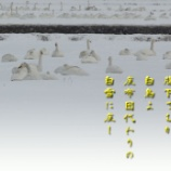 『雪の座布団』の画像