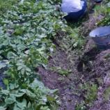『バザー 畑班 畑の徒然。。』の画像