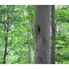 『本当に良い森』の画像