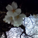 『花冷えの一日』の画像