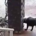 イヌが庭で何かと対峙していた。たくさんのマングースだ → 戦い方はこんな感じ… 【300(スリーハンドレッド)】