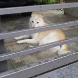『美犬』の画像