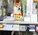 【悲報】世界中から客、「シバちゃん」のたばこ店閉店