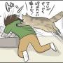 実家猫マロちゃんが許さないもの