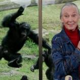 『米国大統領とチンパンジー』の画像