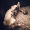 前田敦子の猫が可愛すぎる