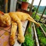 『台湾 平渓線を巡る旅【1】猫村 侯硐へ』の画像