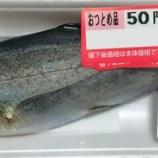 『50円のニジマス』の画像