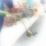 『打ち水大作戦』の画像