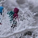 『雲仙・普賢岳に霧氷を見に行ってきました』の画像