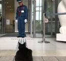 「猫まみれ展」にネコ来訪 警備員とのどかな攻防