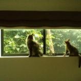 『猫と窓』の画像