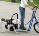 【車で犬を散歩】動画炎上のおじいちゃん(88) 「ワシはもう歩けんのじゃ」と説明