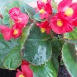 『夏花壇』の画像