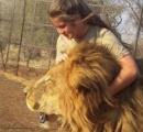女性(21)、飼養場のライオンに切り刻まれ死亡