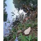 『雨乞いの池』の画像
