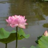 『南条 花はすまつりプチツーリング』の画像
