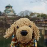 『日本です ~【大阪城公園】』の画像