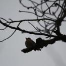 近くの公園で野鳥観察&名鉄新型車両