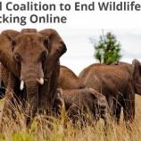 『野生生物の違法ネット取引、撲滅へ』の画像