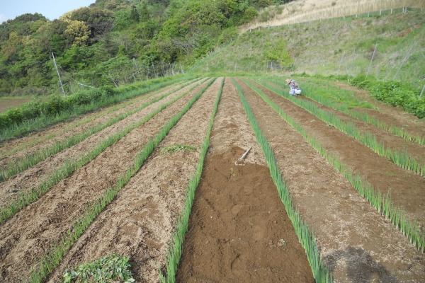 農法 炭素 循環
