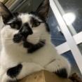 【猫】まるでラーメン屋のオヤジの量産型みたいンゴねぇ…