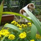 『【ピノ子流】大事な鉢土を再生させる方法とネコブ線虫の対処法について』の画像