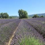 『南仏  ツアーに参加 次の村へ』の画像