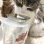 高齢猫がご飯を食べやすくなる100円グッズ