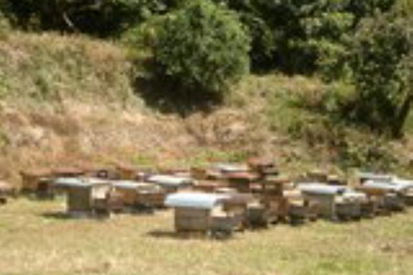 森 養蜂 箱 あつ