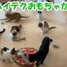 ~5/9★推し猫グランプリ投票