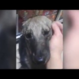 『虐待されていた犬が撫でられて』の画像